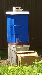 Beehive 7 2016